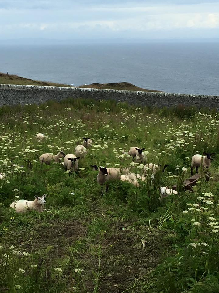 lambs-at-the-lighthouse
